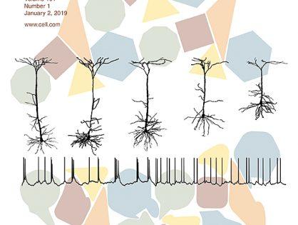 Migraine-Associated TRESK Mutations Increase Neuronal Excitability through Alternative Translation Initiation and Inhibition of TREK