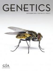 Natural Variation and Genetic Determinants of Caenorhabditis elegans Sperm Size