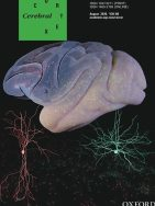 COUP-TFI/Nr2f1 Orchestrates Intrinsic Neuronal Activity during Development of the Somatosensory Cortex
