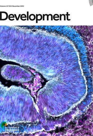 Circulating Hedgehog: a fresh view of a classic morphogen