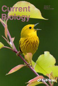 Ubiquitous Selfish Toxin-Antidote Elements in Caenorhabditis Species