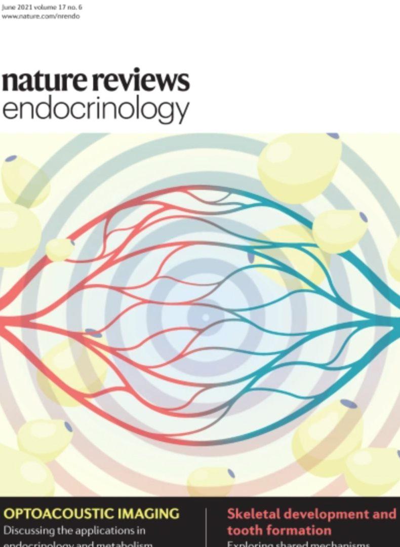 Adrenal cortex renewal in health and disease