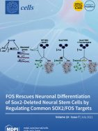 The FibromiR miR-214-3p Is Upregulated in Duchenne Muscular Dystrophy and Promotes Differentiation of Human Fibro-Adipogenic Muscle Progenitors