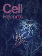 Hedgehog Signaling Modulates Glial Proteostasis and Lifespan