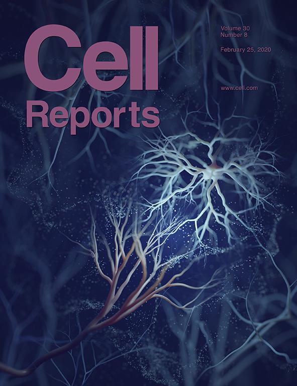 Hedgehog Signaling Modulates Glial Proteostasis and Lifespan